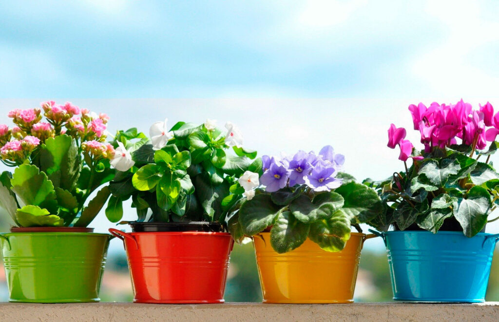 How to properly care for indoor plants